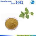 Fourniture d'usine de GMP de haute qualité nature pure Extrait de basilic sacré, poudre d'extrait de basilic sacré