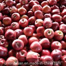 Embalagem de 20kg Red Fresh Delicious Apple