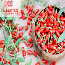 Wolfberry / Lycium Barbarum / Venta caliente Goji Berry