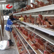 Chicken Cage For Poultry Farm With 96/120/128/160 Birds Capacity