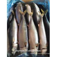 Frozen pacific makcerl / chub mackerel