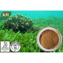 Proteína 60%, 65% por Kjeldahl Spirulina Platensis Pó