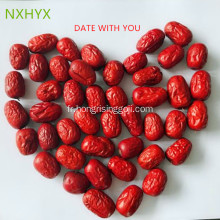 Dates rouges de Ningxia zhongning