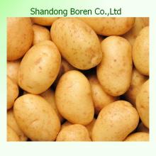 Heißer Verkauf, chinesische frische Kartoffel-hohe Gualität