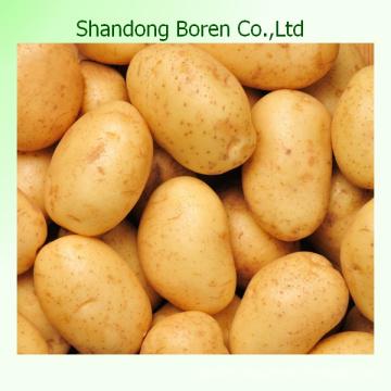 Shandong Boren Wholesale Provide Fresh Potatoes