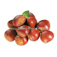 2016 Chinese Organic Fresh Chestnut