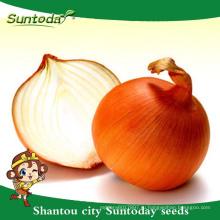 Suntoday vegetable органическое сад Ф1 купить онлайн желтые семена лука длительного хранения поставщик(81003)