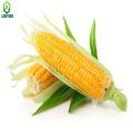 Top quality Vitamin B2 , Riboflavin manufacturer , CAS:83-88-5