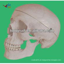 Tamanho da vida Modelo humano para modelo de crânio de educação