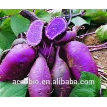 Extracto de patata dulce púrpura natural del 100%, polvo púrpura de la patata dulce, antocianina del 5% -80%