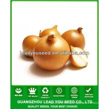 JON01 forma redonda venta muy caliente semillas de siembra para los precios de las semillas de cebolla