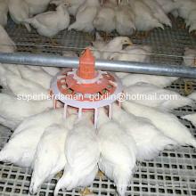 Автоматическая птицеводство Оборудование для фермы птичника