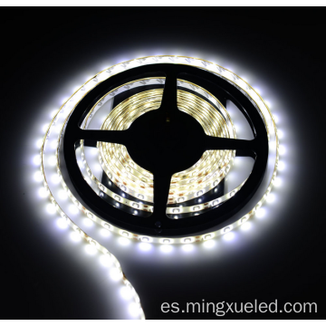tira de LED flexible profesional 5050 60leds / m