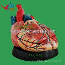 Modelo ISO Modelo novo Anatomia do Coração Jumbo, modelo educacional