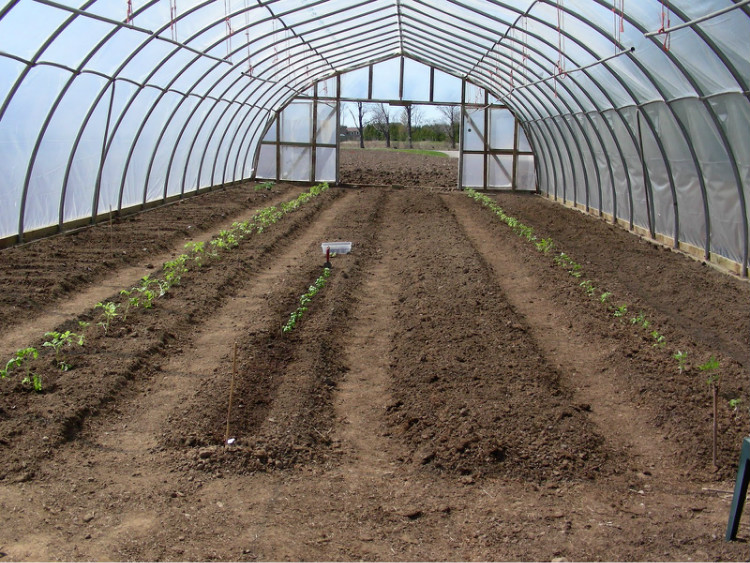 PE film Single Span Greenhouse