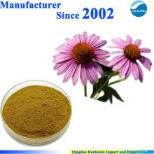 Fornecimento de fábrica de GMP 100% puro extrato Natural echinacea purpurea