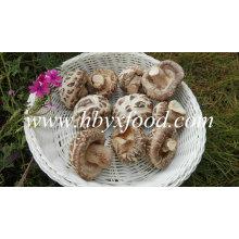 Сушеные овощи без стержня (белый цветок гриб)