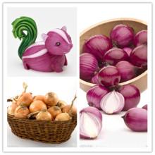 2015 High Quality New Crop Fresh Red Onion