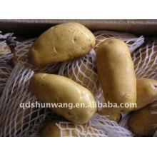 Fresh Potato Round Shape
