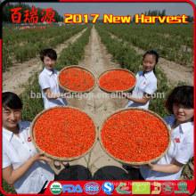 Organic goji berry miracle fruit Ningxia wolfberry slimming food