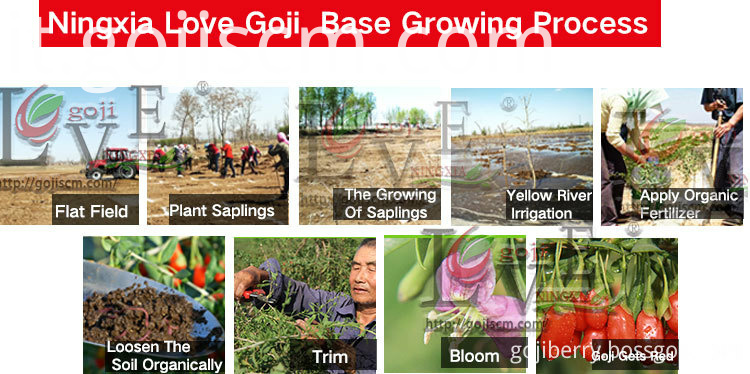 Hypotensive Goji Berry growing process
