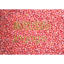 Export Chinese New Crop Gute Qualität Rote Bohne