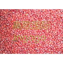 Exportação de Nova Cultura Chinesa Boa Qualidade Feijão Vermelho