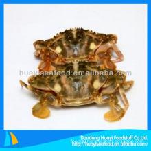 New season frozen mud crab