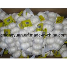 Fornecedor Dourado Chinês Fresco Alho Branco Puro