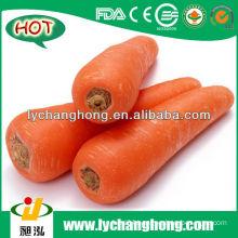 2014 New Crop Shandong Fresh Red Carrot Supplier
