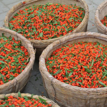 Goji Berries Dried Fruit Conventional Organic