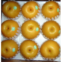 Sweet Juicy Fresh Fengshui Pear (36/40/44)