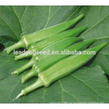 MOK011 Qiuhui alta qulity semillas híbridas de okra para las ventas