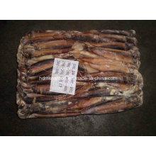 Mejor calidad congelada Argentinus Illex Squid
