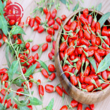 Wolfberry / Lycium Barbarum / Low residues Goji berries