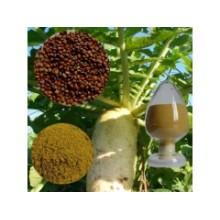 5: 1; 10: 1 extrato de semente de rabanete