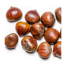 New Crop Chinese Chestnut For Wholesale Top Grade Healthy And Natural Chestnut