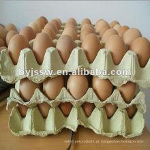 Reciclar a caixa de ovo de papel