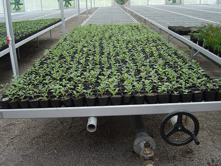 Movable Seed Bed Bench For Seedling Space-Saving
