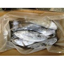 Nueva fuente de pescado congelado Bonito para la venta