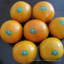 Exporter la qualité standard de l'orange navel frais