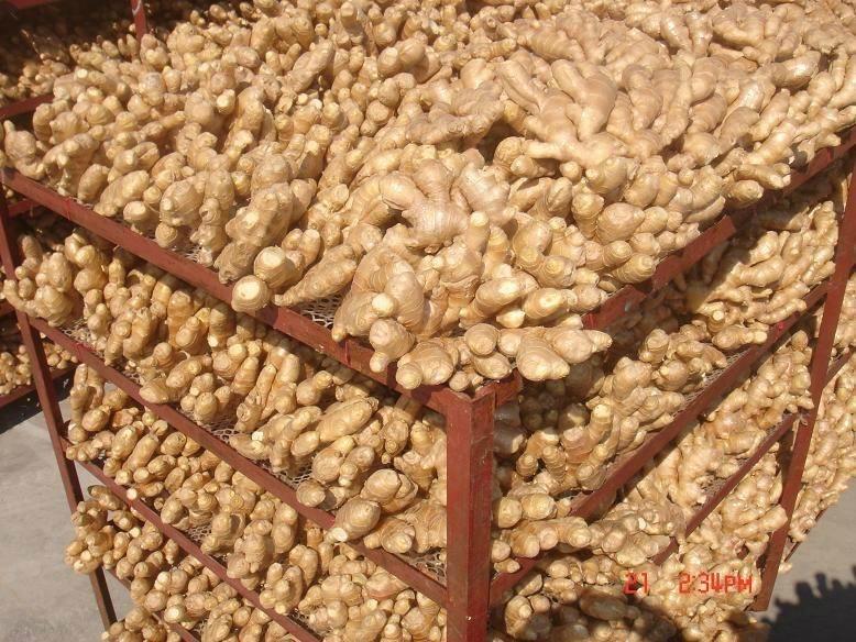 Customized Multi Functional Farm Fruit Vegetable Conveyor Mesh Belt Agricultural
