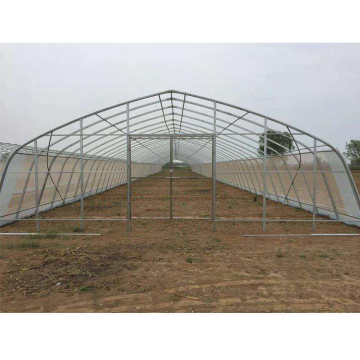 Single Span Plastic House Tunnel Greenhouse