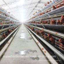 Автоматическая куриная Ферма клетки для несушек и бройлеров
