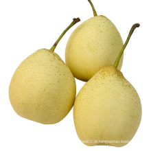 New Crop Boa Qualidade Fresh Ya Pear