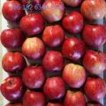 Яблоко красной звезды без мешков