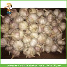 Jinxiang China Venta al por mayor de ajo blanco normal fresco 5.5cm de malla de bolsa en el cartón para el Brasil