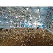 Granja de aves de corral, casa de pollo para pollos de engorde (CH-41)