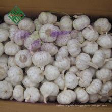 new crop fresh pure white garlic in bulk