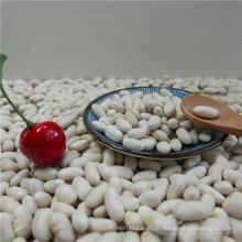 Feijão Vermelho Branco de Alta Qualidade